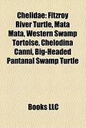 Chelidae: Fitzroy River Turtle
