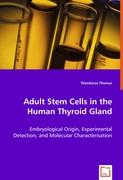 Adult Stem Cells in the Human Thyroid Gland